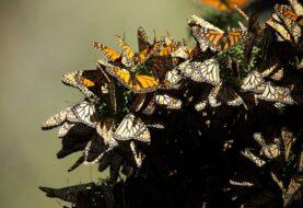 Mariposas, lirios y alebrijes